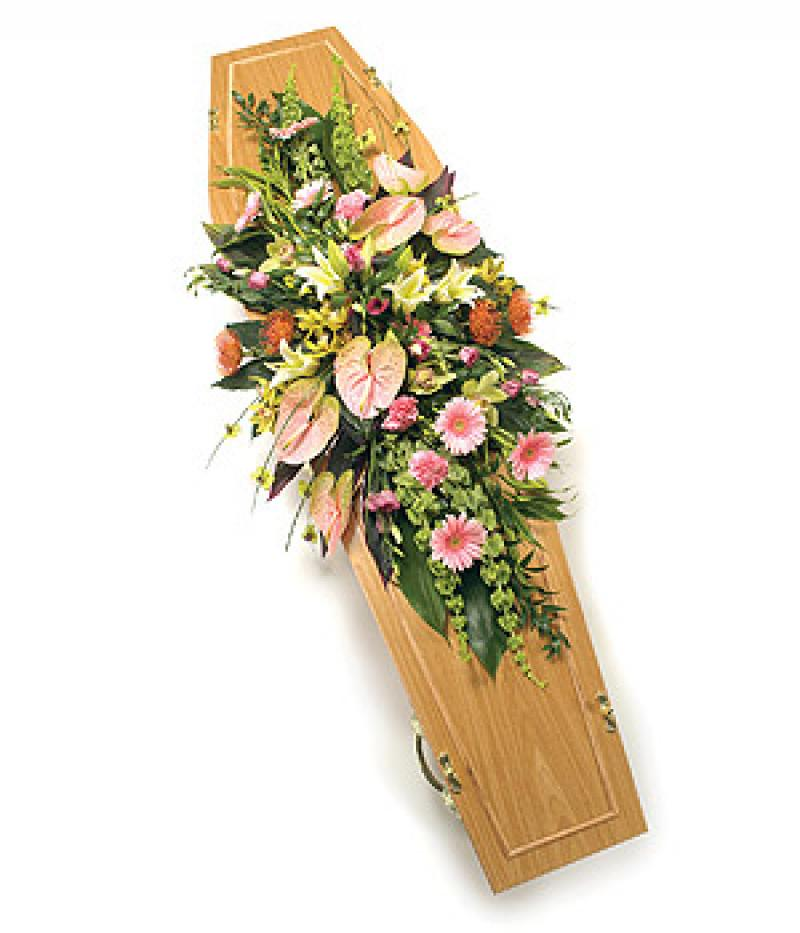 COFFIN SPRAY PINKS. Click to enlarge