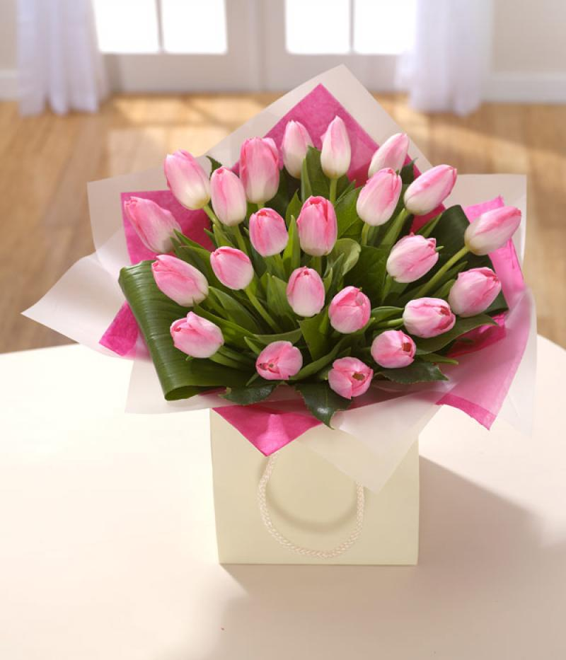 PRETTY IN PINK TULIPS. Click to enlarge