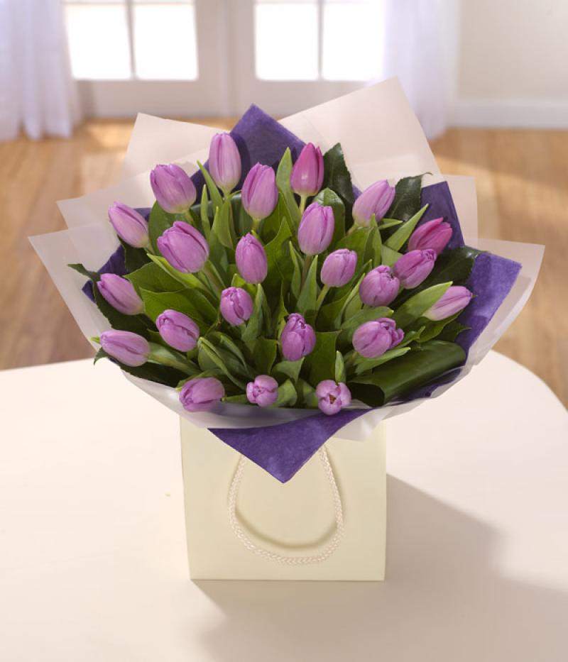 PURPLE TULIPS. Click to enlarge